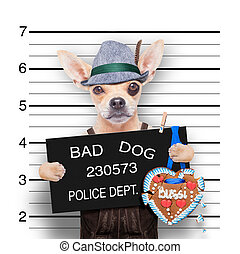 bavarian beer mugshot dog - bavarian german chihuahua dog...