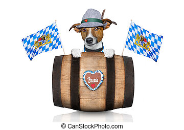 bavarian beer dog - bavarian german jack russell dog with...