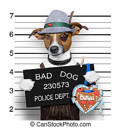 bavarian beer mugshot dog - bavarian german jack russell dog...