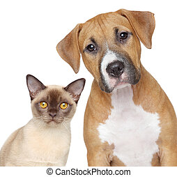 Cat and Dog portrait on a white background - Burmese cat and...