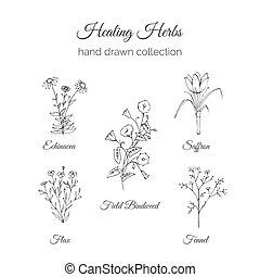 Holistic Medicine. Healing Herbs Illustration. Echinacea,...