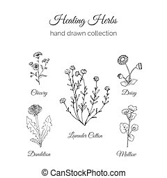 Holistic Medicine. Healing Herbs Illustration. Handdrawn...