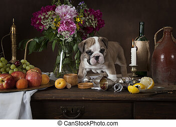 English Bulldog puppy in Dutch style - Six weeks old English...