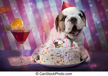 English Bulldog puppy birthday