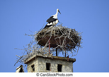 Zoology, Birds - Austria, white storks in a stork's nest on...
