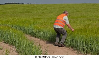 Farmer walking and using tablet PC at cereals field