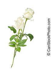 White roses on a white background - Two white roses on a...