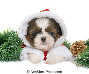 puppy shih tzu and christmas