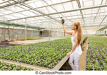 Young gardener working in a large greenhouse nursery - A...