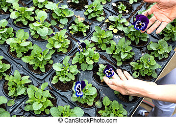 Close-up of a woman planting flowers in a greenhouse