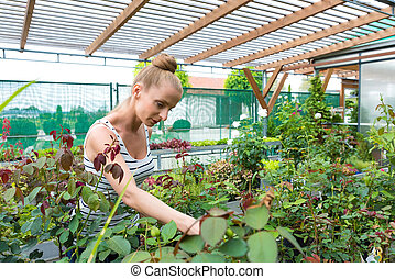 Young adult woman gardening in a greenhouse, planting some...