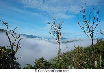 Tropical Rainforest Chong Yen, Mae-wong Nation park in...