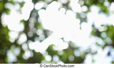 the bokeh in the tree crown in the sun - beautiful bokeh in...