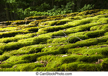 Stone roof slabs with moss