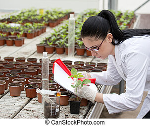 Biologist with sprouts in greenhouse - Young woman in white...