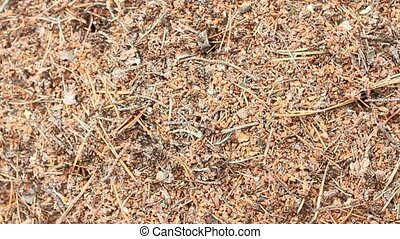 ant hill in the forest - life in the big ant hill in the...