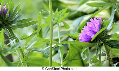Beautiful spring background with purple flowers in the...