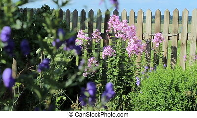 Beautiful spring background with pink flowers in the garden...