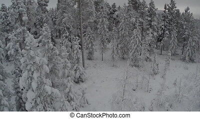 Flying over the Forest in Winter - Aerial shot of forest in...