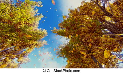 Autumn leaves falling from trees - Look up at the golden...
