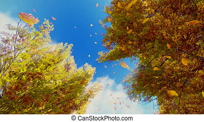Falling autumn leaves and sunny sky - Rotating video of...