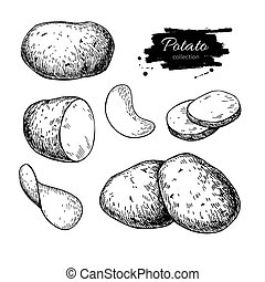 Potato drawing set. Vector Isolated potatoes heap, sliced pieces and chips.