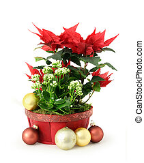 Red Christmas flower - Red white Christmas flower decoration...