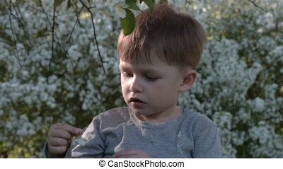 Boy and blooming apple tree - Child playing with apple-tree...