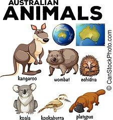 Australian wild animals and Australia map illustration