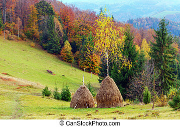 haystack - two haystack near autumn forest