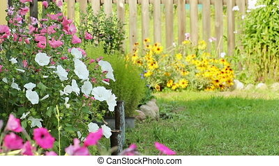 Beautiful spring background with maroon flowers in the garden.