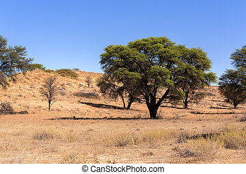 dry kgalagadi transfontier park - dry landscape with tree in...