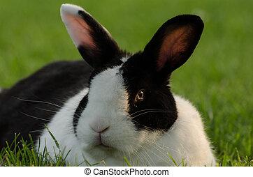 black white hare looks
