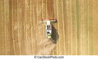 Harvester working in field and mows wheat. Ukraine. Video...