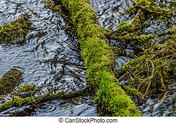 bole with moss in water - bole with green moss in water