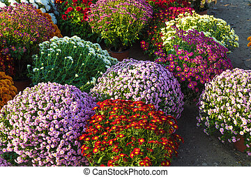 Blossoming flowerbeds in the park located closeup