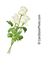 White roses on a white background - Elegant bouquet of three...