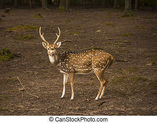 Spotted deer male profile image - Profile image with a...