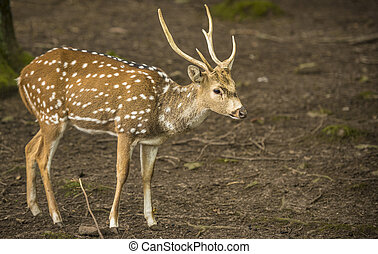 Axis deer buck profile image - Profile image with a cute...
