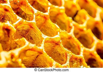 honeycomb macro as a background