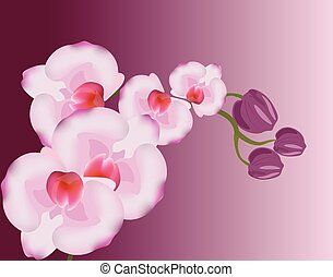 Orchid flowers background