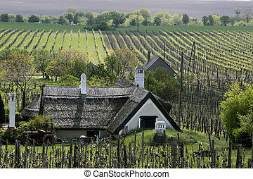 Vineyards and Farmhouse at Lake Balaton - Vineyards and farm...