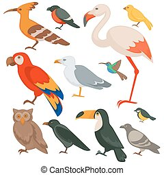 Colorful birds set: parrot, flamingo and bullfinch, robin...