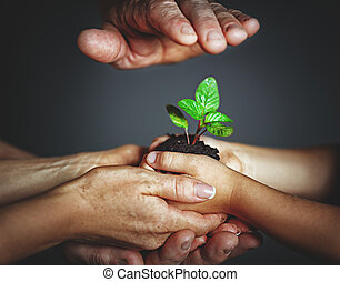 concept of family, kindness and parenting Hands of mother...