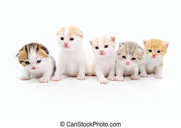five little fluffy kittens on a white background