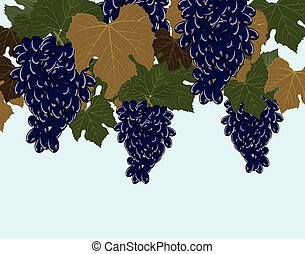 Red Grapes clusters