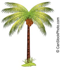 Palm with coco - The Tropical tree palm with fruit...