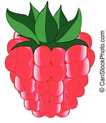 Ripe berry raspberry - Vector illustration of the ripe berry...