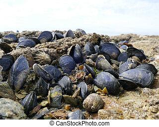 bilder von tide muscheln teich wachsen steinen mussels wachsen csp23254076 suchen. Black Bedroom Furniture Sets. Home Design Ideas