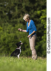 Dog training - Young woman playing with border collie dog...